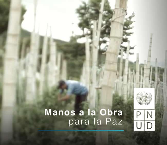 Con PNUD contamos los avances del proyecto Manos a la obra para la Paz.